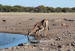 Namibia.8